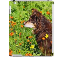 A Thoughtful Moment For  Australian Shepherd iPad Case/Skin