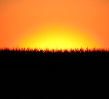 Midwestern Sunset by Melonie Wallace