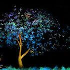 Butterfly Wish by brandiejenkins