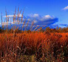 #29   Autumn Field by MyInnereyeMike