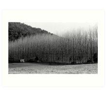 Winter's Day - Colo 1 Art Print