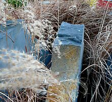 Porcupine Grass by dianegreenwood