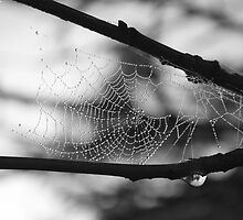 Misty Mountain Morning.... Spider Web1 by GritFX