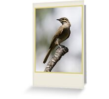 Yellow-faced Honeyeater, Lichenostomus chrysops Greeting Card