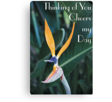 Thinking of you cheers my day Canvas Print