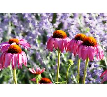 Pink and Lavender Photographic Print