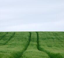 Field by Paul Finnegan