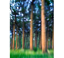 ~ the blue confetti forest ~ Photographic Print