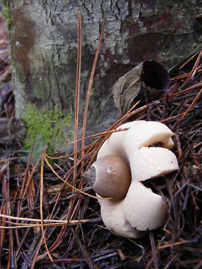 Earth star by Esther's Art and Photography