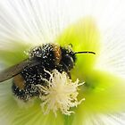 Bumblebee on Hollyhock by Detlef Becher