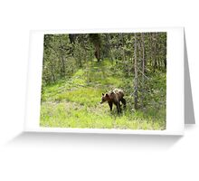 Drive by Grizzly Greeting Card