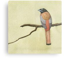 Scarlet-backed Trogon Metal Print