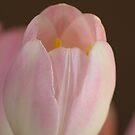 Tulip by Tanya Small