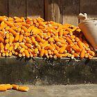 Harvest by Leonie Harris
