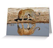 Leopard Reflection - Okavango Delta, Botswana Greeting Card