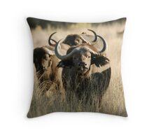 Buffalo - Okavango Delta, Botswana Throw Pillow
