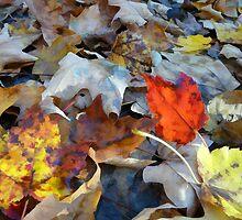 Vermont Fallen Leaves by Jerry Deutsch