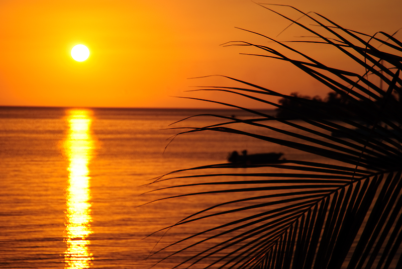 Negril Sunset with palm by tgmurphy