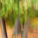 Trees- 17 - Impressions by Yannik Hay