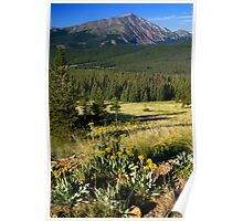 Wildflowers and The Rockies Poster