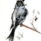 Pewee by Cordell Cordaro