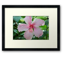 Jamaican Flower Framed Print