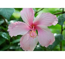 Jamaican Flower Photographic Print