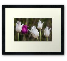 Five Tulip Flowers Framed Print