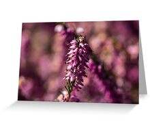 Macro Heather Plant Greeting Card