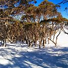 Snow and trees by Yincinerate