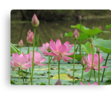 On Lotus Pond Canvas Print