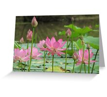 On Lotus Pond Greeting Card