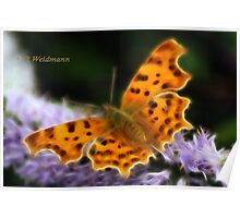 Comma Butterfly On Hebe. Poster