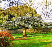 White Tree by knottynikki