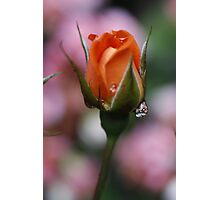 Monica Rose Photographic Print
