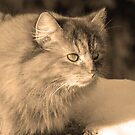 Sepia Cat by MarianaEwa