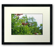 The Fly in Framed Print