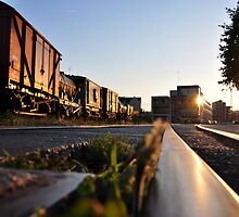 The Tracks Of Our Sunlight by Kevin Cotterell