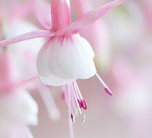 Soft Fuchsia by AnnieSnel