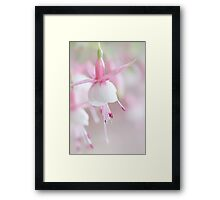 Soft Fuchsia Framed Print