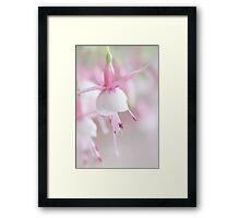 Soft Fuchsia Framed Print