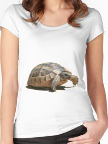 Portrait of a Young Wild Tortoise Isolated Women's Fitted Scoop T-Shirt