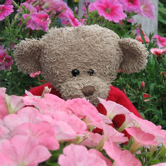 Bear in the Garden Flowers by L J Fraser