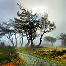 Magic Path by Rick Lawler