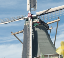 Dutch windmill and narcissus Sticker
