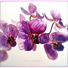 Orchidee by ©Janis Zroback