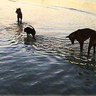 Amazing Thai Beach Dogs by DAdeSimone