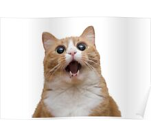 funny cat face Poster