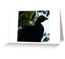 Perched Peacock in Shade Greeting Card