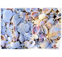 Seashells at Sunset Have Great Colors! Poster